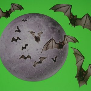 MOON & BATS DECORATION